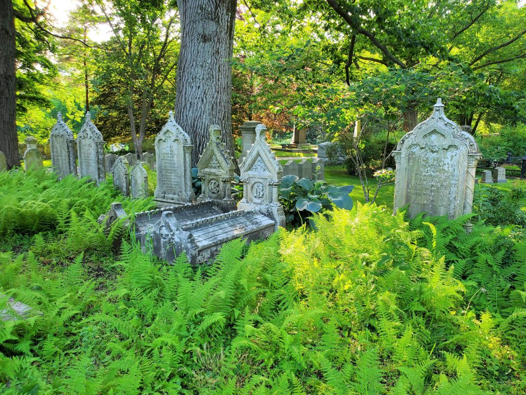 Ferns surrounding Cemetery monuments