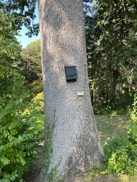 Tree with bat house attached.