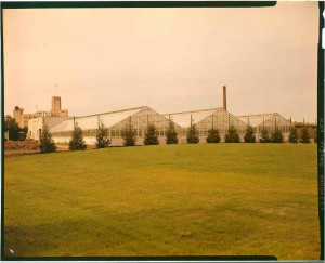 Exterior view of greenhouses, Alan Chesney, 1973, color transparency.