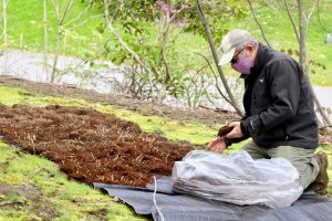 Man kneeling on ground planting new plants in bare earth
