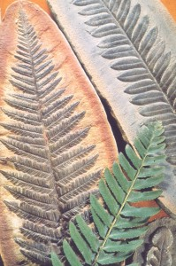 Fossils and Fern